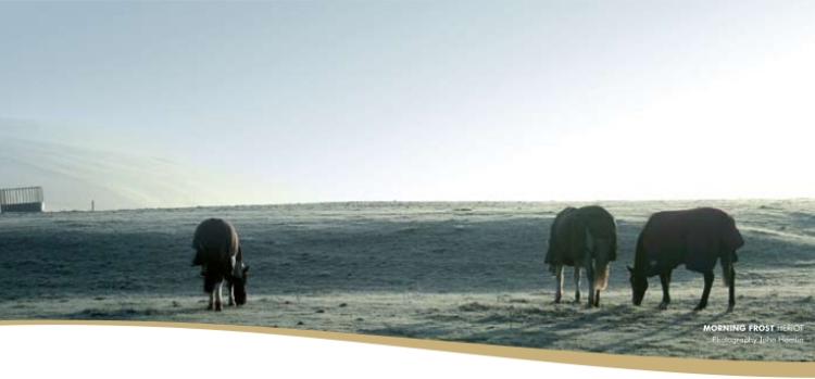 snow and donkeys